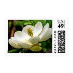 Cierre de la flor de la magnolia para arriba