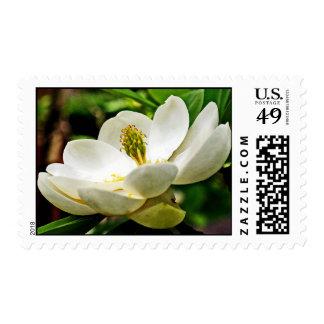 Cierre de la flor de la magnolia para arriba envio