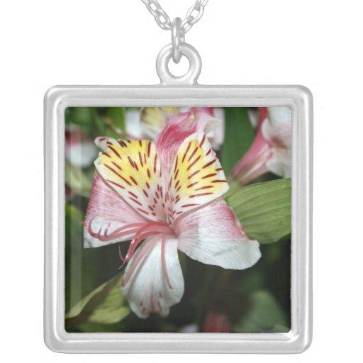 Cierre de la flor de la orquídea para arriba, foto colgante cuadrado