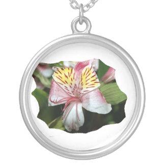 Cierre de la flor de la orquídea para arriba, foto colgante redondo