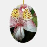 Cierre de la flor de la orquídea para arriba, foto ornatos