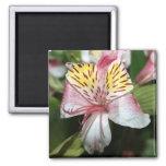 Cierre de la flor de la orquídea para arriba, foto imán de nevera
