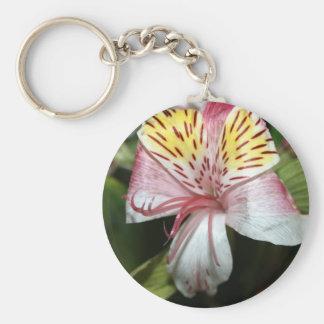 Cierre de la flor de la orquídea para arriba, foto llaveros personalizados