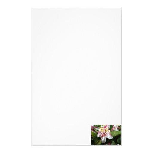 Cierre de la flor de la orquídea para arriba, foto  papeleria
