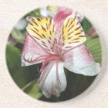 Cierre de la flor de la orquídea para arriba, foto posavasos manualidades