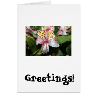 Cierre de la flor de la orquídea para arriba, foto tarjeta de felicitación