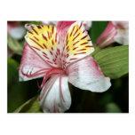 Cierre de la flor de la orquídea para arriba, foto postales