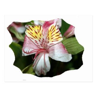 Cierre de la flor de la orquídea para arriba, foto tarjeta postal