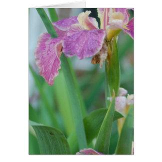 Cierre de la flor del iris encima de la tarjeta de