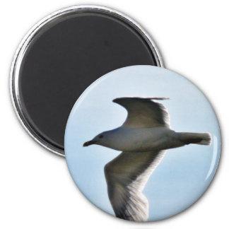 Cierre de la gaviota del vuelo para arriba imán redondo 5 cm