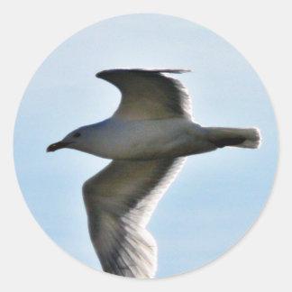 Cierre de la gaviota del vuelo para arriba pegatinas redondas