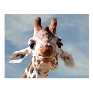 Cierre de la jirafa con el cielo azul tarjetas postales