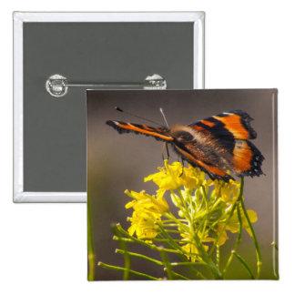Cierre de la mariposa de la concha de Milbert para Pin Cuadrado