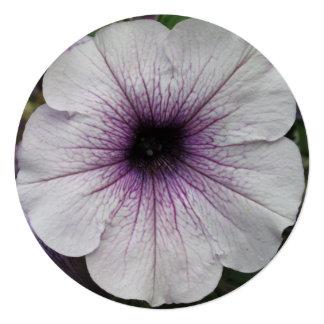 """Cierre de la púrpura de la petunia invitación 5.25"""" x 5.25"""""""