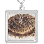 Cierre de la rana del sapo encima de la fotografía joyerias
