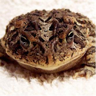 Cierre de la rana del sapo encima de la fotografía esculturas fotográficas