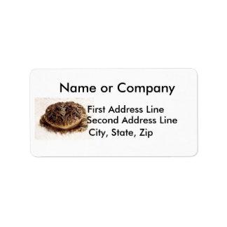 Cierre de la rana del sapo encima de la fotografía etiquetas de dirección
