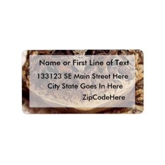 Cierre de la rana del sapo encima de la fotografía etiqueta de dirección