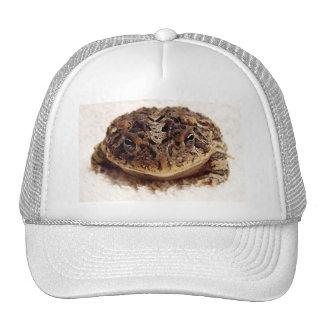 Cierre de la rana del sapo encima de la fotografía gorras
