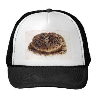 Cierre de la rana del sapo encima de la fotografía gorra