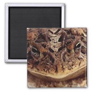 Cierre de la rana del sapo encima de la fotografía imán de frigorífico