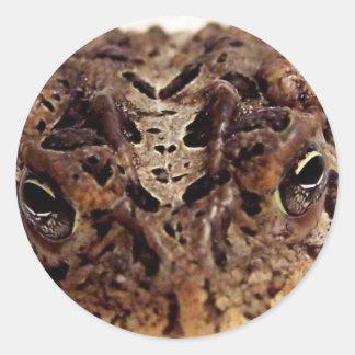 Cierre de la rana del sapo encima de la fotografía etiquetas redondas