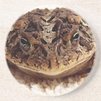 Cierre de la rana del sapo encima de la fotografía posavaso para bebida