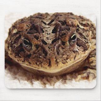 Cierre de la rana del sapo encima de la fotografía tapetes de raton