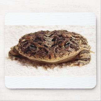Cierre de la rana del sapo encima de la fotografía alfombrillas de raton
