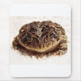 Cierre de la rana del sapo encima de la fotografía alfombrilla de ratones