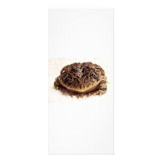 Cierre de la rana del sapo encima de la fotografía lona personalizada