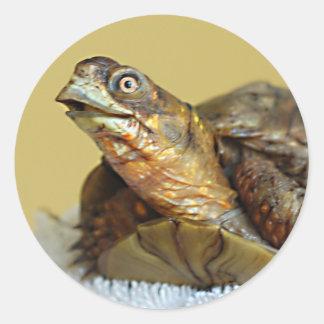 ¡Cierre de la tortuga de caja para arriba Etiqueta