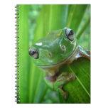 Cierre de mirada lindo de la rana arbórea para arr cuadernos