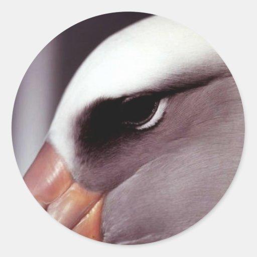 Cierre del albatros de Laysan encima del tiro prin Pegatinas