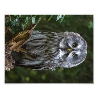 Cierre del búho de gran gris encima de pájaros de fotografías