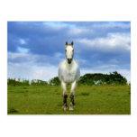 Cierre del caballo blanco para arriba postales