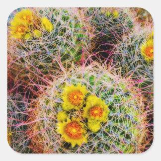 Cierre del cactus de barril para arriba, pegatina cuadrada