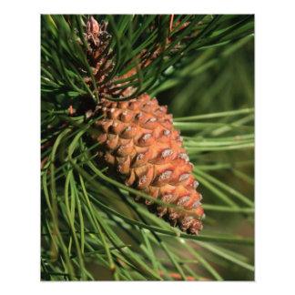 Cierre del cono del pino para arriba cojinete
