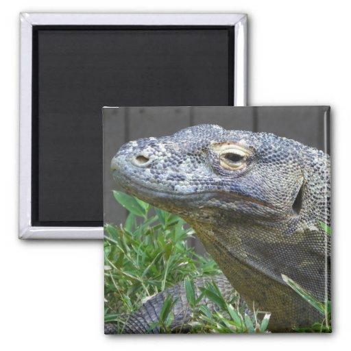 Cierre del dragón de Komodo para arriba Imán Cuadrado