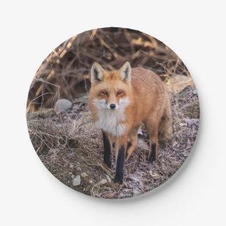 Cierre del Fox rojo para arriba y personal Plato De Papel De 7 Pulgadas