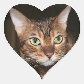 Cierre del gato de Bengala para arriba Colcomanias De Corazon Personalizadas