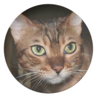 Cierre del gato de Bengala para arriba Platos De Comidas
