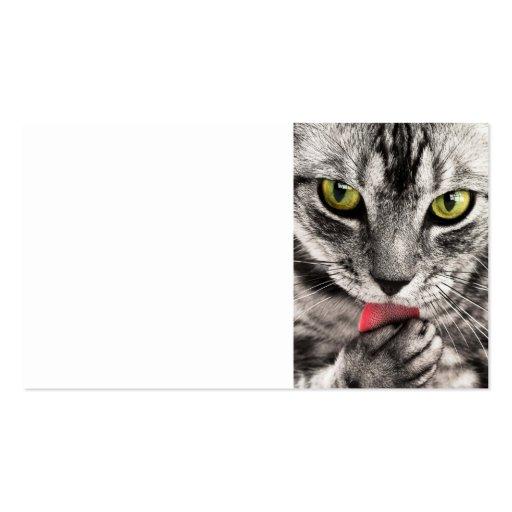 cierre del gato de tabby tabby-114782 encima del f tarjetas de negocios