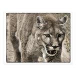 cierre del león de montaña para arriba postal