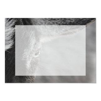 """cierre del ojo de la cabra encima de la imagen invitación 5"""" x 7"""""""