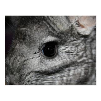 cierre del ojo de la chinchilla para arriba tarjeta postal