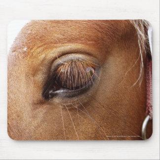 Cierre del ojo del caballo/del potro encima de alfombrilla de raton