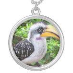 Cierre del pájaro del Hornbill para arriba que mir Joyerías