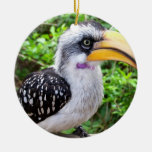 Cierre del pájaro del Hornbill para arriba que mir Adorno