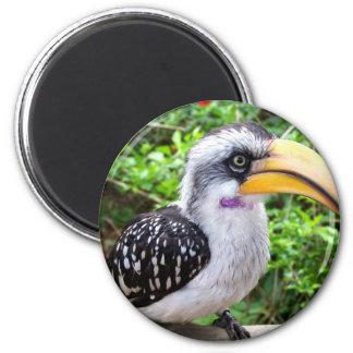 Cierre del pájaro del Hornbill para arriba que mir Imán De Nevera
